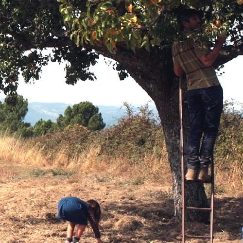 Faz a colheita da sua encomenda, na Propriedade do Produtor Agrícola