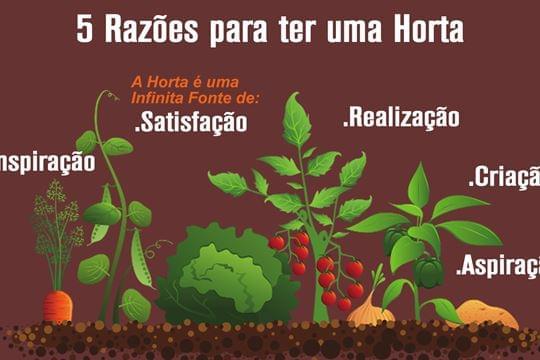 5 Razões Excelentes para ter uma Horta!