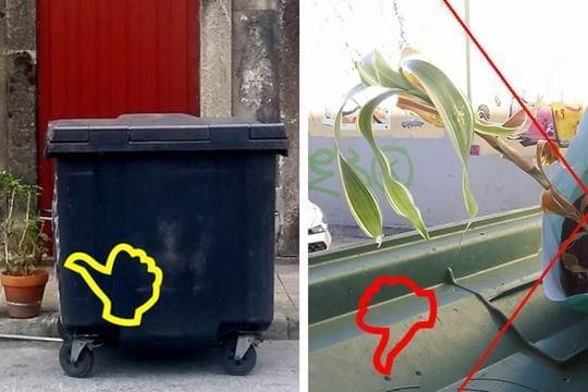 Uma planta é lixo?