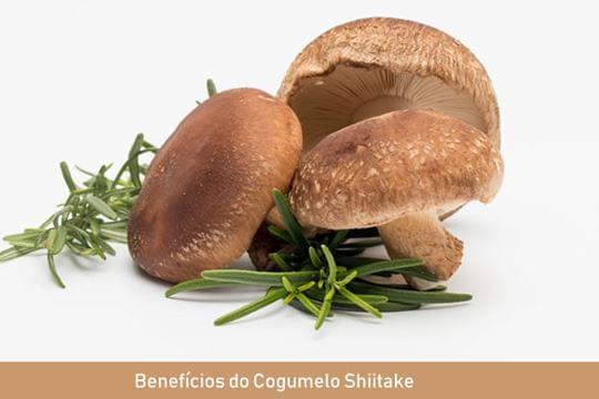 Benefícios do Cogumelo Shiitake - Para que serve?