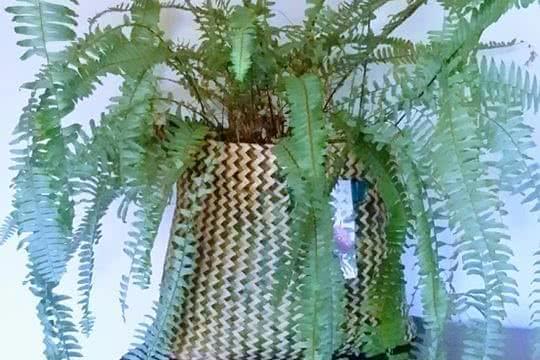 Salvar as plantas, de nós próprios!