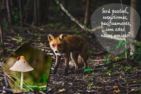 Cadeia agro-alimentar mais sustentável.
