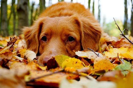 O outono chegou a minha casa...