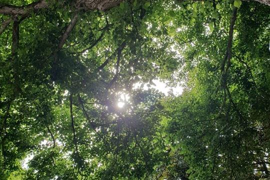 PETIÇÃO PÚBLICA: Manifesto por uma floresta discriminada