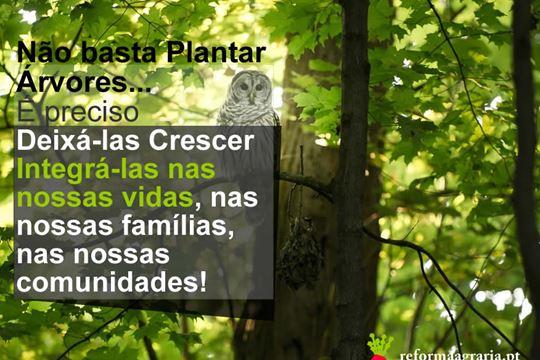 Não basta plantar árvores, é preciso preservá-las!