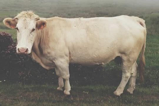 O Mito da Carne