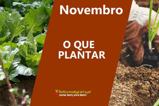 O queplantar na Horta, em Novembro