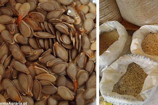 Proibida a venda de sementes tratadas com tirame