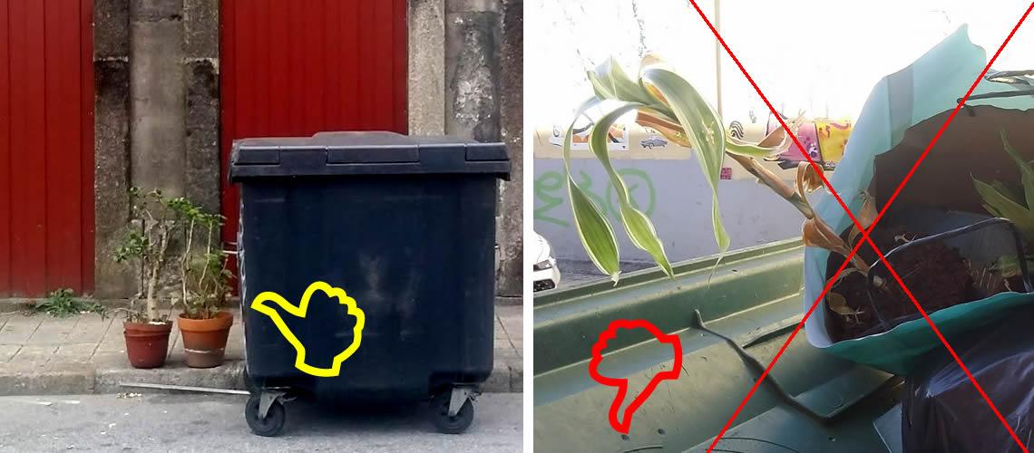 As plantas não são lixo descartável!
