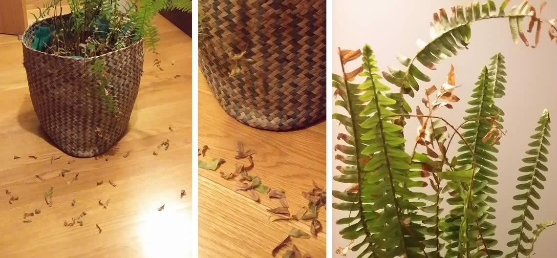 Às vezes, é necessário salvar as plantas, de nós próprios!