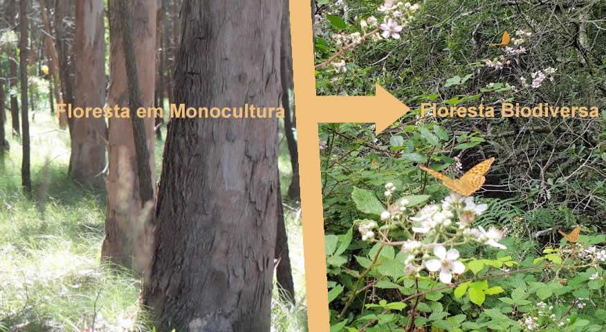 Manifesto por uma floresta discriminada!
