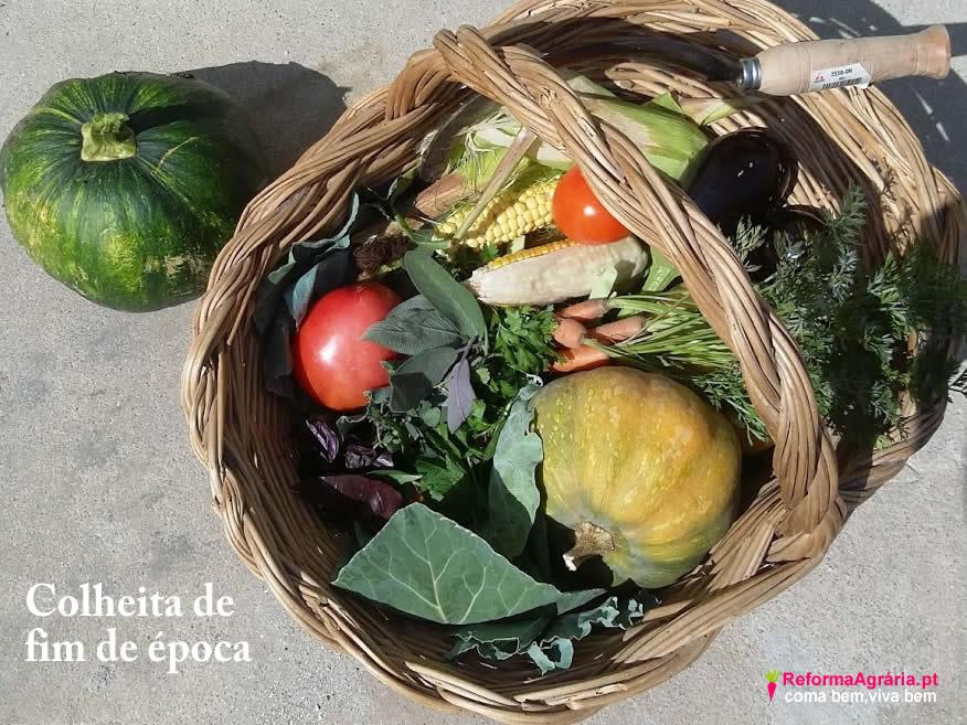 diretamente da horta, sabe melhor e faz bem!| Reforma Agrária