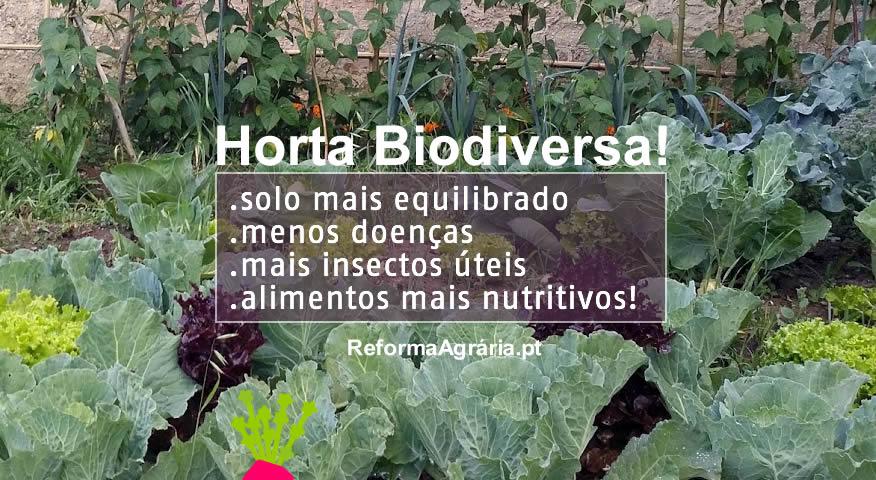 A diversificação de culturas agrícolas é o caminho da sustentabilidade | Reforma Agrária