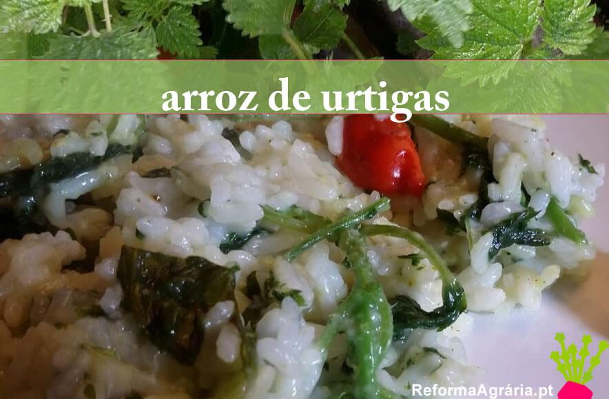 receita de arroz de urtigas| Reforma Agrária