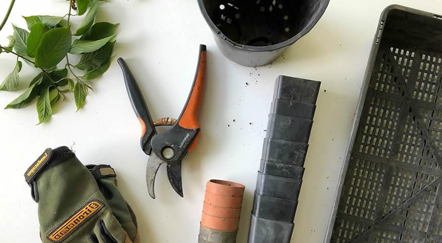 A horticultura como ferramenta terapêutica.| Reforma Agrária