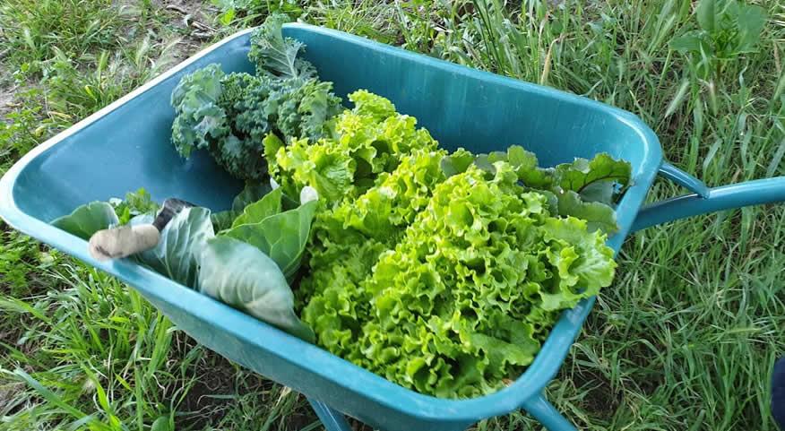 Ministério da Agricultura lança campanha: Alimente quem o Alimenta| Reforma Agrária