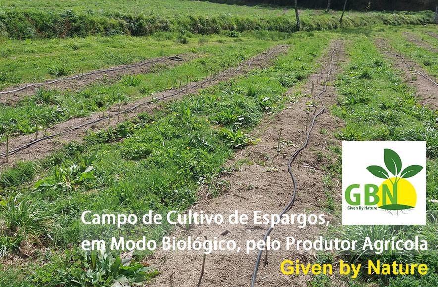 Campo de Espargos frescos do produtor bio Given by Nature  | Reforma Agrária
