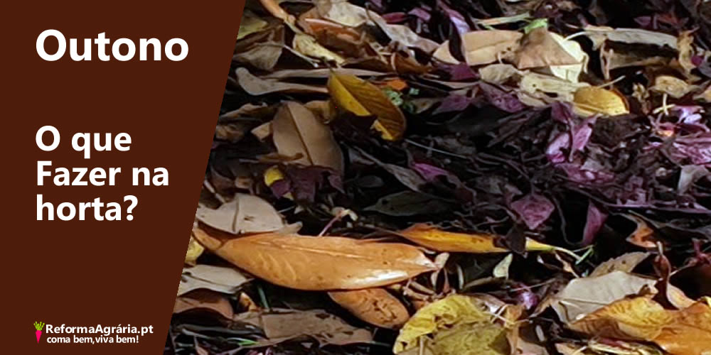 As tarefas da Horta, ou do quintal, durante o Outono | Reforma Agrária