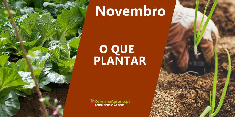 O que plantar na Horta, em Novembro | Reforma Agrária
