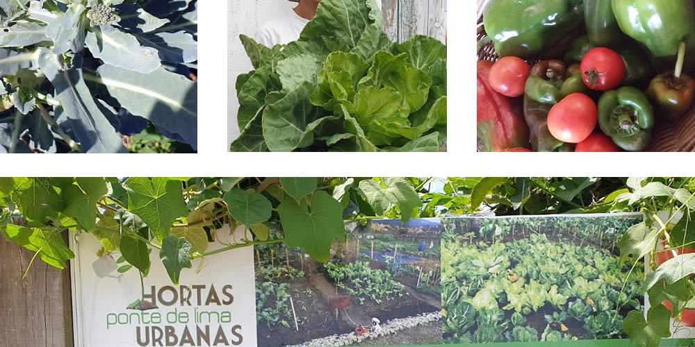 Hortas Urbanas Comunitárias | Reforma Agrária