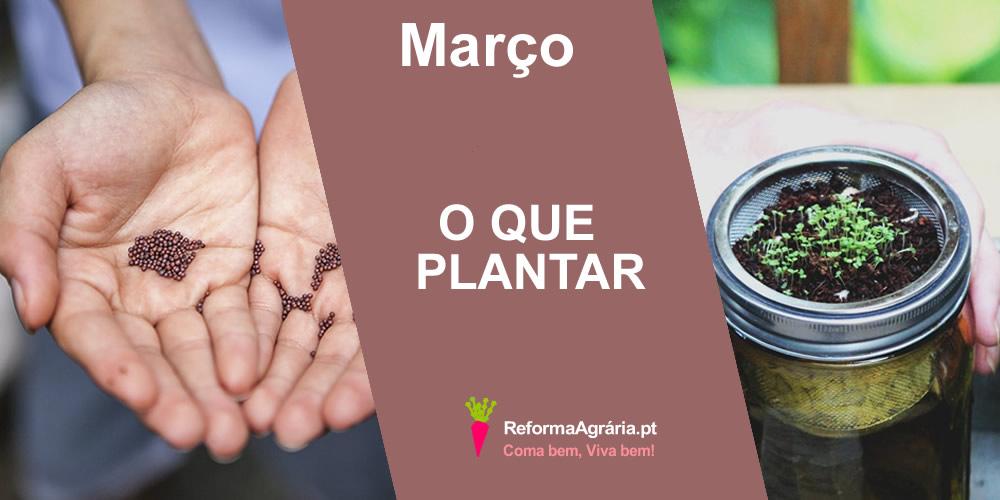 O que Semear e plantar na Horta, ou em vaso, em Março | Reforma Agrária