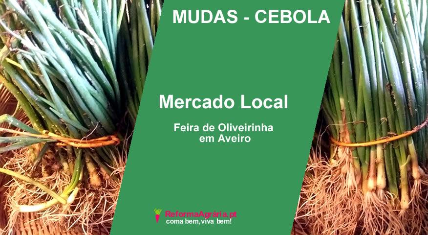 Mudas de Cebola, à Venda num Mercado Local, Feira de Oliveirinha, em Aveiro  Reforma Agrária
