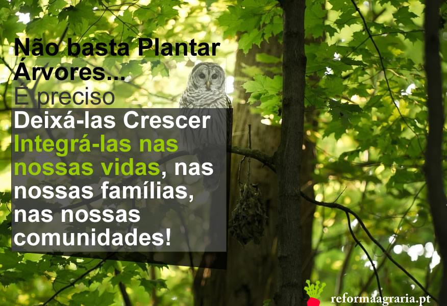 Não basta plantar árvores, é preciso deixá-las crescer e integrá-las nas nossas vidas, nas nossas famílias, nas nossas comunidades!| Reforma Agrária