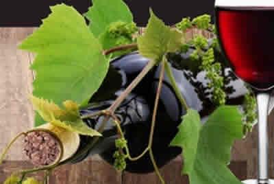 Feira do Vinho e do Bacelo