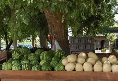 Mercado de Fruta do Carril