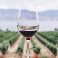 Vinhos Tintos de Mesa