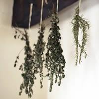 Ervas Aromáticas e Medicinais