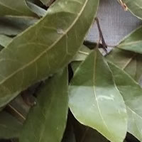 Especiarias