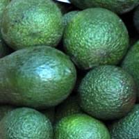Abacates frescos