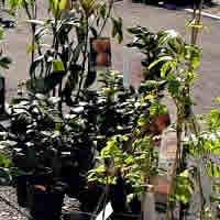 Outras planta viva