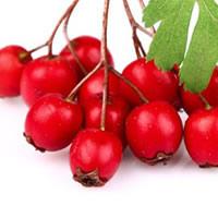 Rosa Mosqueta planta viva