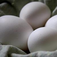 Ovos de gaivota