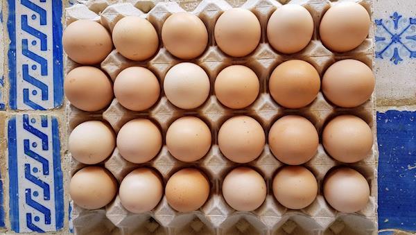 Ovos para incubação
