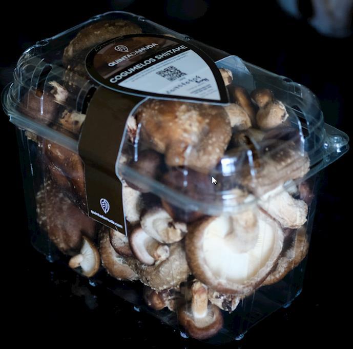 Cogumelos Shitake 5Kg | 10 Caixas de 500g
