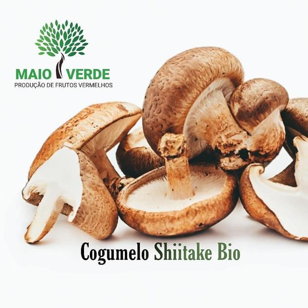 Cogumelo Shiitake