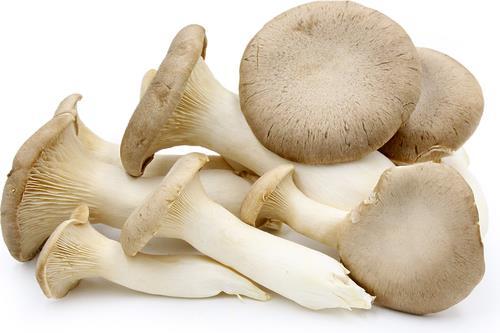 9fd592960 Cogumelo do Cardo fresco, Preço: 10,83 €/kg | Loja da Reforma Agrária