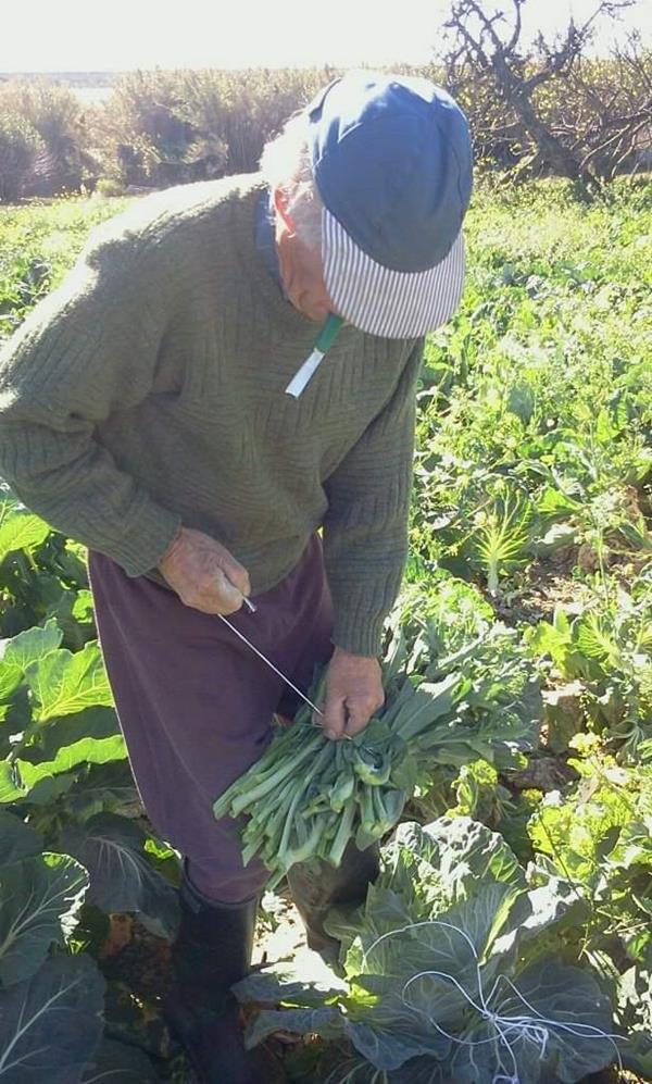 Couves portuguesa e hortaliças