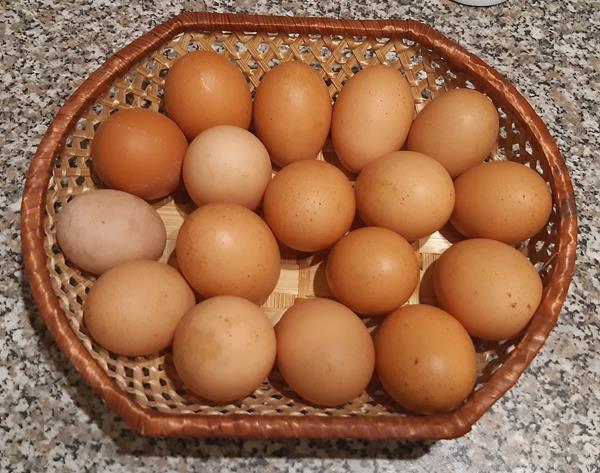 Ovos do campo