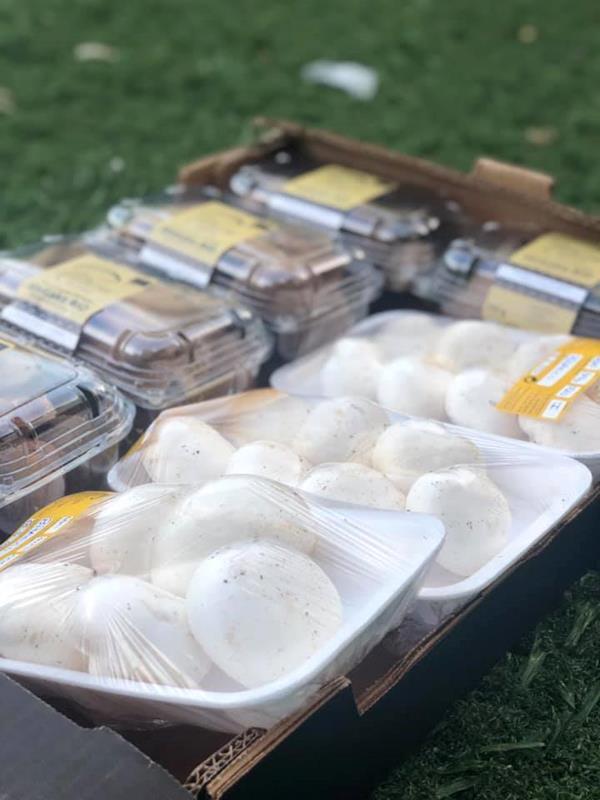Cogumelo Branco  - Biológico
