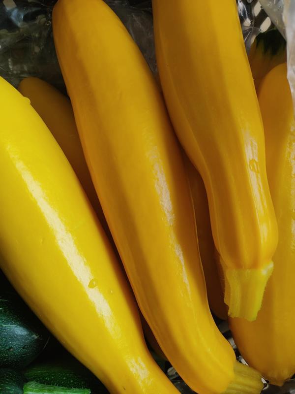 Curgete amarela biológica