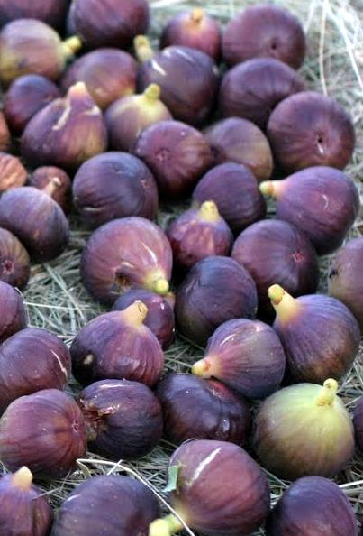 Figos Roxos