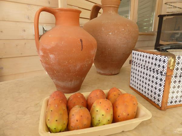 Figos-da-índia polpa laranja e vermelha