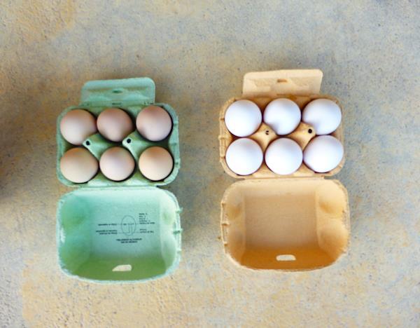 Ovos de galinhas autóctones portuguesas criadas ao ar livre segundo os princípios da agricultura biológica