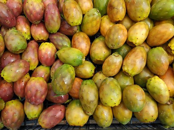 Figo-da-índia Biológico