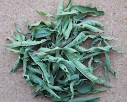 Lúcia-lima Demeter (Planta inteira)