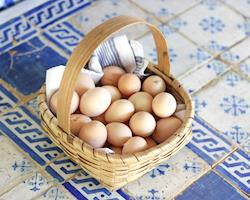 Ovos galinhas raças portuguesas